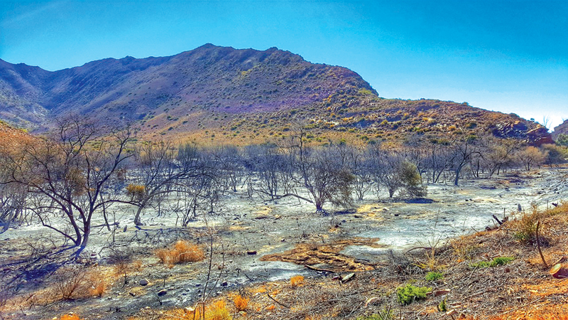 Prins Albert-brande volg op brandstigting - Splinternuwe brandweerwa op pad