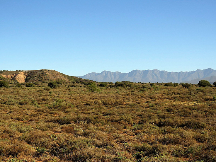 Greylands Conservation Area, against the backdrop of the Swartberg Mountains. Photo: CapeNature