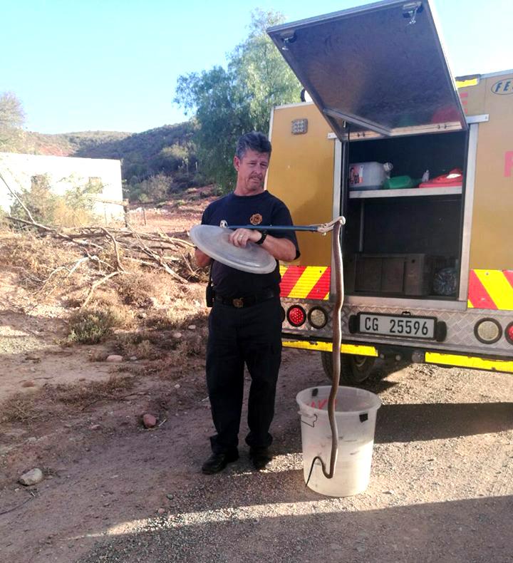 Mornay Thysse van Oudtshoorn Nooddienste met die Kaapse kobra. Foto: Facebook