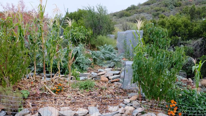 'n Deel van die tuin wat volgens die beginsels van permakultuur verbou word.