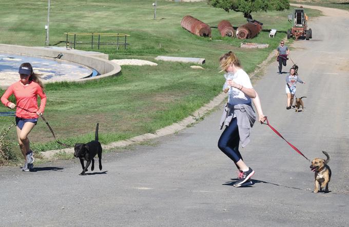 Groot pret toe inwoners met  diereskut se honde gaan stap