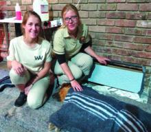 R40 000-projek op dorp om diere te steriliseer