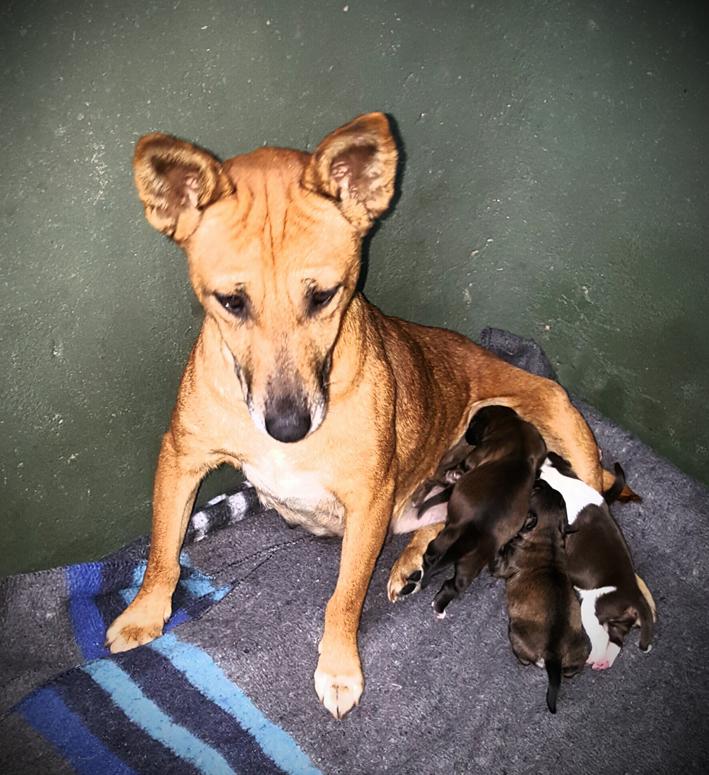 Hulp gevra met inisiatief om 100 diere te steriliseer