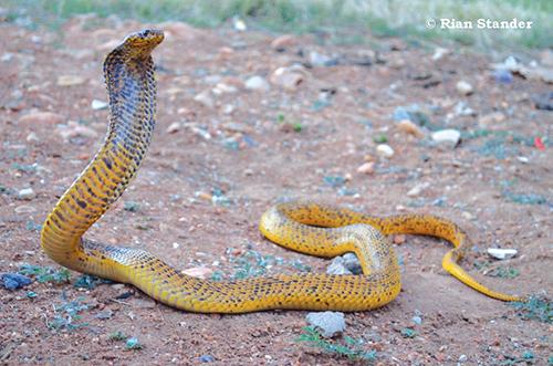 Wees so paraat teen slange