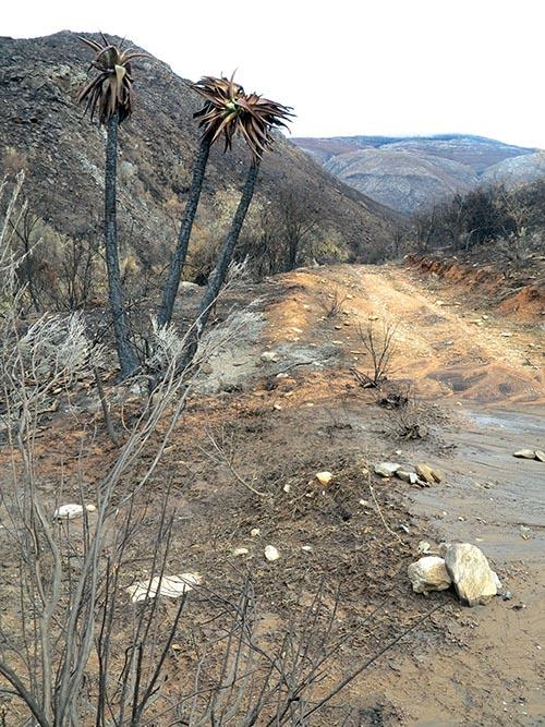 Die veld tussen die Rust-en-Vredewaterval naby die Kango Bergoord en Mei rings poort naby De Rust het in Desember verlede jaar erg deurgeloop onder 'n vernietigende veldbrand. Foto: Liesel le Roux