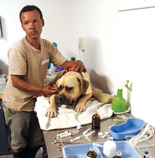 Rudi Wagenaar van Oudtshoorn Dogs in Need (ODIN) sit hand by met een van die honde wat gesteriliseer is.  Foto verskaf