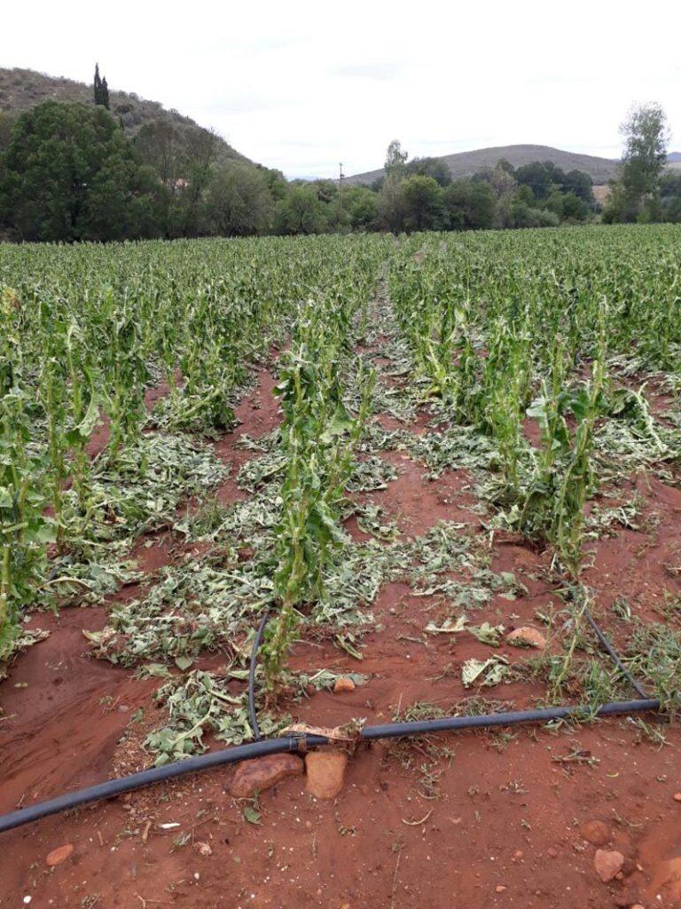 Massiewe skade toe hael tabaklande slaan