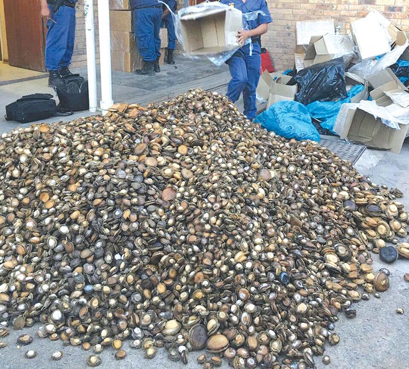 1,4 ton perlemoen op Ladismith gekonfiskeer