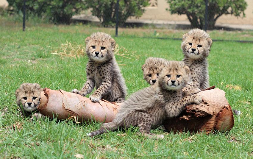 New babies at Wildlife Ranch