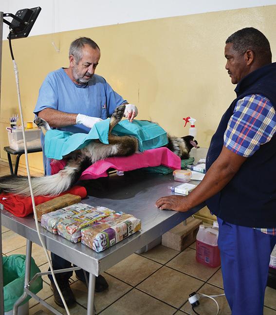 Massa-sterilisasie op Uniondale 'n eerste vir die dorp
