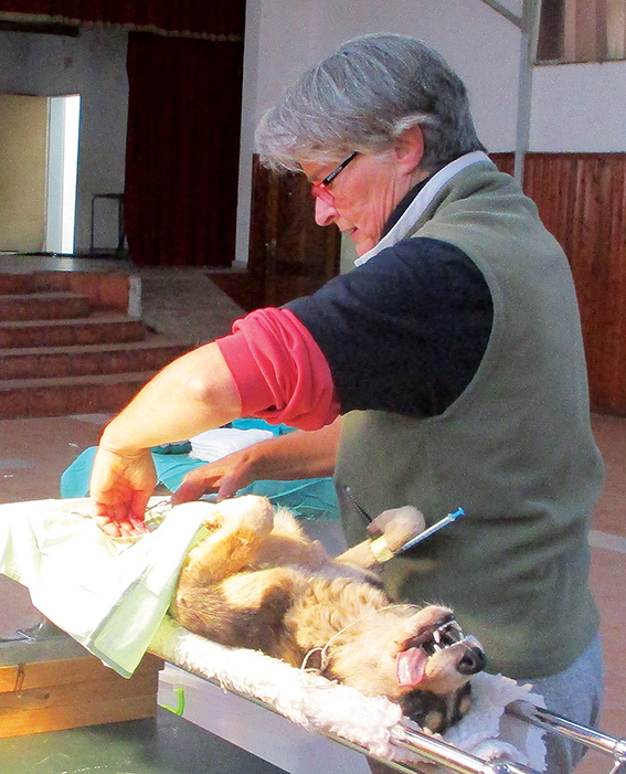 80 diere in Ladismith gesteriliseer