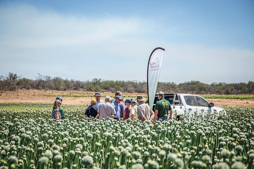 Klein Karoo Saadproduksie hou Saad Rally